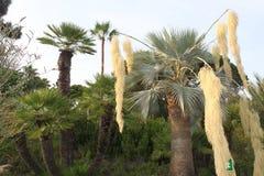 设置棕榈 免版税库存图片