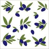 设置橄榄树枝 艺术开花夹子例证结构树 免版税库存照片