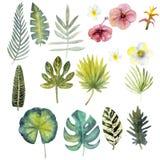 设置水彩五颜六色的热带叶子 17 clipart 库存例证