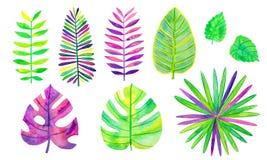 设置水彩热带叶子 Monstera和棕榈叶在充满活力的颜色 r 手画花卉 皇族释放例证