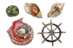 设置水彩 与贝壳的汇集 库存图片