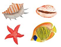 设置海动植物水彩 库存例证