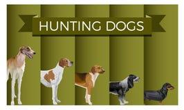 设置猎犬 库存例证