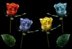设置玫瑰 红色,蓝色,黄色,绿松石在与裁减路线的被隔绝的黑背景开花 特写镜头 没有影子 芽  库存图片