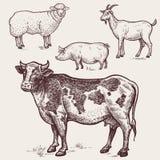 设置禽畜-母牛,绵羊,猪,山羊 动物农场横向许多sheeeps夏天 库存照片