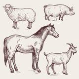 设置禽畜-马,绵羊,猪,山羊 动物农场横向许多sheeeps夏天 库存照片