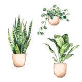 设置罐的水彩手画室内植物 皇族释放例证