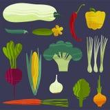 设置蔬菜 也corel凹道例证向量 库存图片