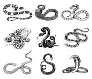 设置蛇蝎蛇 蛇眼镜蛇和Python、水蟒或者蛇蝎,皇家 刻记手拉在老剪影,葡萄酒样式 库存例证