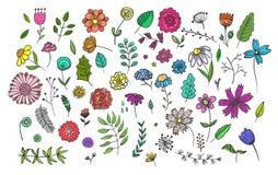 设置逗人喜爱的手拉的五颜六色的花和草本 向量例证