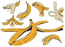 设置香蕉果皮 E 向量例证