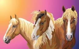 设置马品种8 皇族释放例证