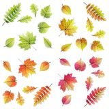 设置32片五颜六色的叶子-秋天,春天 库存图片