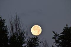 设置8-11-14的超级月亮 免版税库存照片