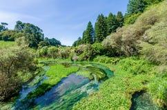设置Te Waihou走道的蓝色春天,哈密尔顿新西兰 免版税库存照片