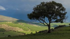 设计合并剪影纹理结构树使用 免版税图库摄影