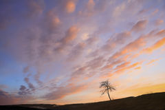 设计合并剪影纹理结构树使用 免版税库存照片