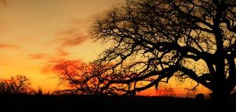 设计合并剪影纹理结构树使用 库存图片