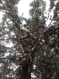 设计图象结构树冬天 图库摄影
