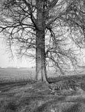 设计图象结构树冬天 北京,中国黑白照片 免版税库存照片