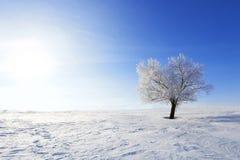 设计图象结构树冬天 在冬天多雪的领域的单独结冰的树 免版税库存照片