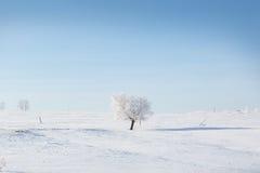 设计图象结构树冬天 在冬天多雪的领域的单独结冰的树 免版税图库摄影