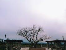 设计图象结构树冬天 免版税库存照片