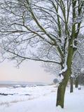 设计图象结构树冬天 库存图片