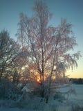 设计图象结构树冬天 免版税图库摄影