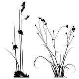 设计师的黑白植物剪影收藏 库存照片