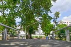 设计庭院庭院哈密尔顿新西兰 规则式园林 庭院春天 库存图片