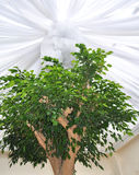 设计想法天花板树 库存照片