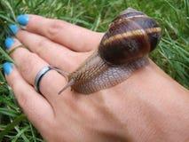 设计现有量查出蜗牛 库存照片