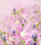 设计的与花,花美丽的花束背景  库存图片