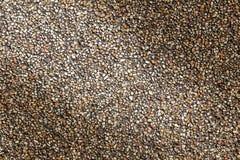 设计的沙子石小卵石纹理背景 免版税库存图片