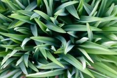 设计的绿草美好的自然本底 免版税库存照片