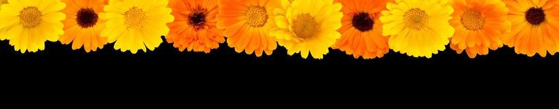 设计的美好的花上面边界 免版税图库摄影