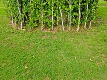 设计美丽的庭院 免版税库存照片