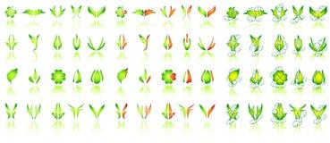 设计花卉 库存照片
