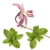 设计要素花卉可爱 免版税库存照片