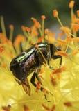 设计要素花昆虫向量 图库摄影