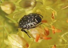 设计要素花昆虫向量 免版税库存图片