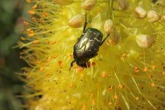 设计要素花昆虫向量 免版税库存照片