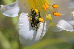 设计要素花昆虫向量 库存照片