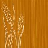 设计黑麦 库存图片