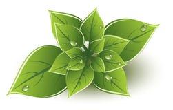 设计eco绿色留下向量 免版税库存照片