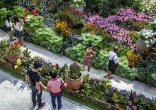访客向滨海湾公园在新加坡敬佩美好的植物显示 库存图片