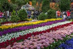 访客向滨海湾公园在新加坡敬佩美好的郁金香显示 库存照片