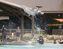 访客和摄影师的海豚突破口Dolphinaris的 免版税库存照片