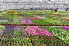 访客自园林植物的耕种的温室 图库摄影